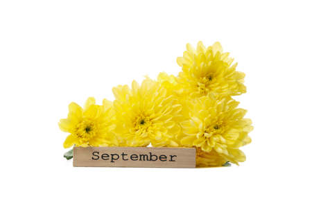 Yellow chrysanthemums and wood with text September isolated on white background Imagens