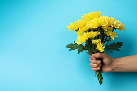 Female hand holds chrysanthemum bouquet on blue background, space for text