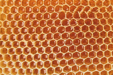 Fresh honeycomb on whole background, close up