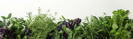 Different herbs on white background, space for text Reklamní fotografie