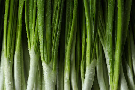 Fresh green onion with water drops, close up Banque d'images