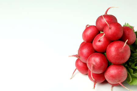 Fresh red radish on white background, space for text