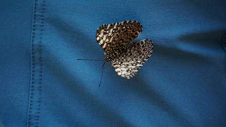 Beautiful butterfly sitting on the woman's dress. Standard-Bild