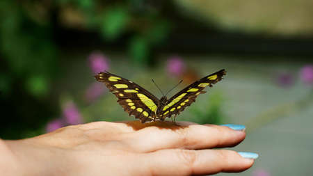Black and yellow butterfly sitting on woman's finger