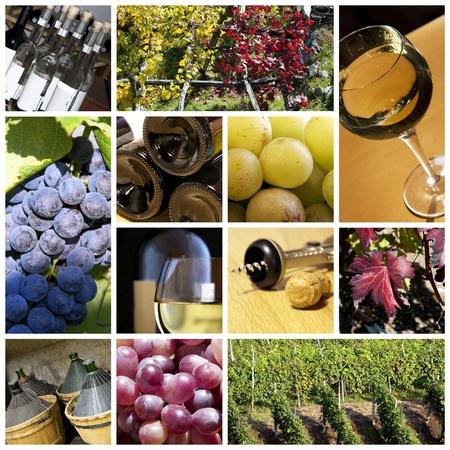 wine colour: Wine collage