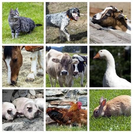 Animals farm collage