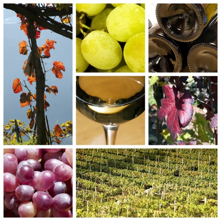 wine country: Wine collage