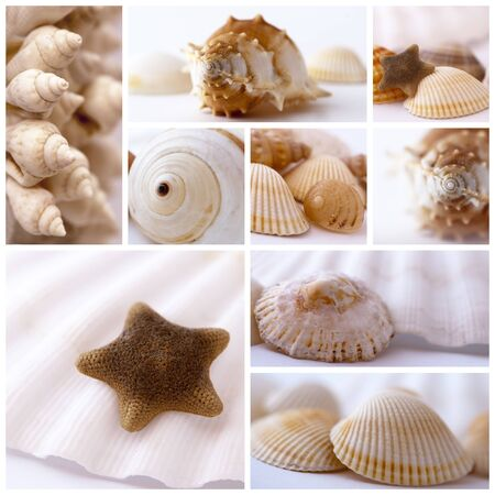 shells collage Stock Photo - 10519582