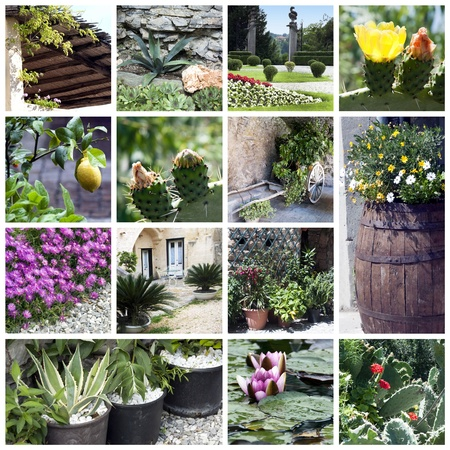 Collage of beautiful garden photo