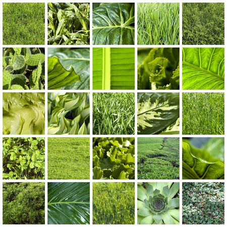 Green collage Stock Photo - 10480107