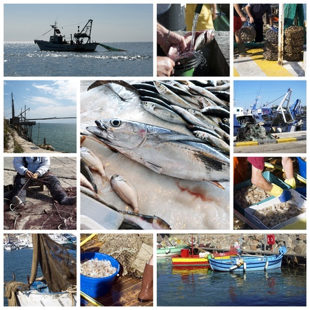 fishing nets: Fish and fishing