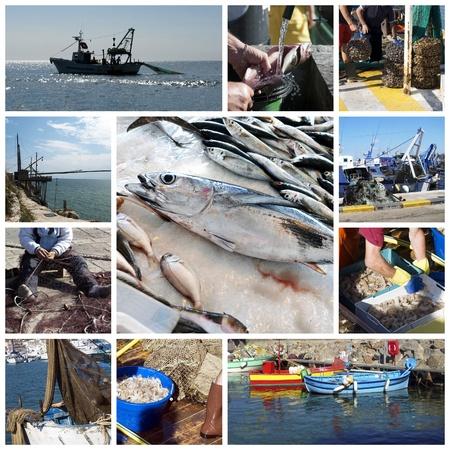 bateau de peche: Les poissons et la p�che Banque d'images