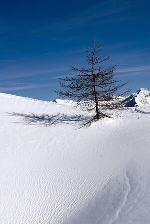 Solitude winter Stock Photo - 10480179