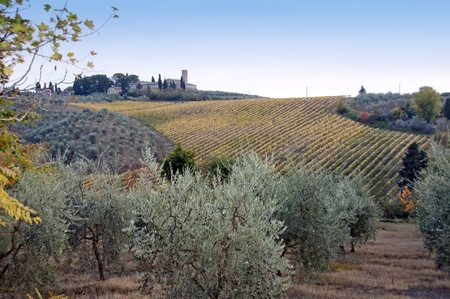 olive farm: typical tuscan landscape Stock Photo