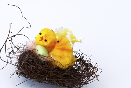 Two little chicks in a nest on white background photo