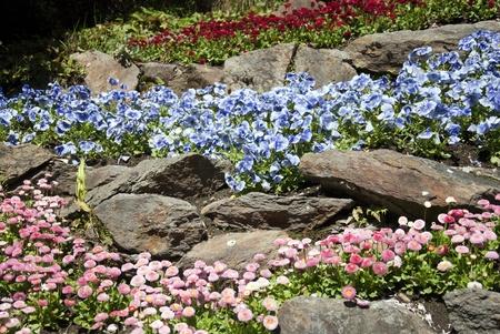 flowers garden Stock Photo - 13317284