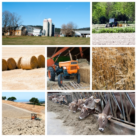 Agriculture collage - a collage of photos about agriculture theme Stock Photo - 14637316