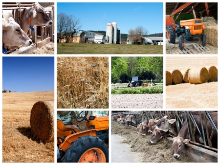 Agriculture collage - a collage of photos about agriculture theme Stock Photo - 14637397
