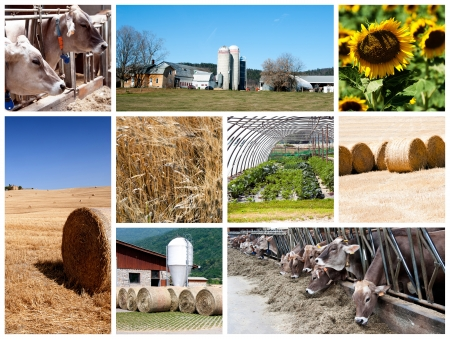 Agriculture collage - a collage of photos about agriculture theme Stock Photo - 14637401