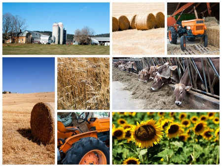 Agriculture collage Stock Photo - 14637389