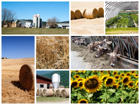 Agriculture collage - a collage of photos about agriculture theme Stock Photo - 14637398