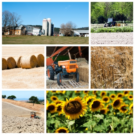 Agriculture collage Stock Photo - 14637353