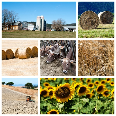 agriculture industry: Agriculture collage - a collage of photos about agriculture theme Stock Photo