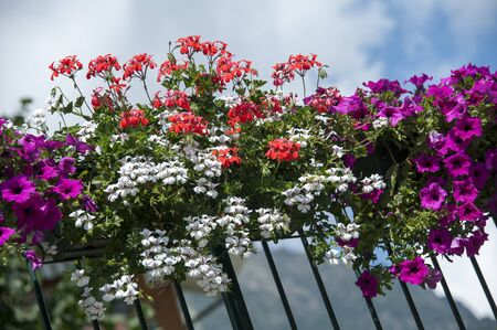 petunias: A beautiful flower box filled with petunias and red geraniums