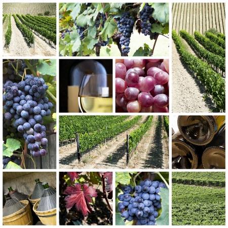 A kollázs mintegy szőlő és a bor témája Stock fotó