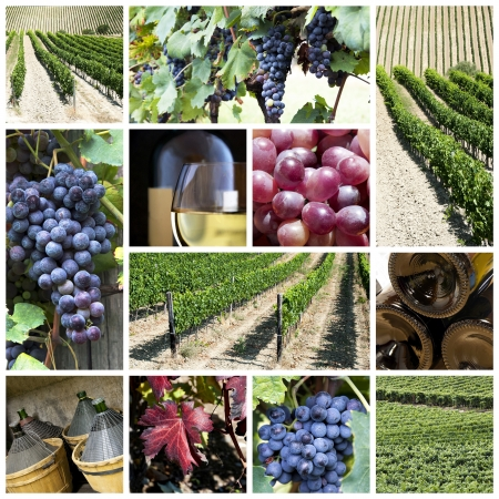 A collage about vineyard and wine theme