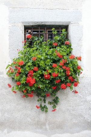 old window with flowers decoration photo