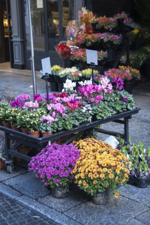 florist shop: bunches of flowers in a flower market