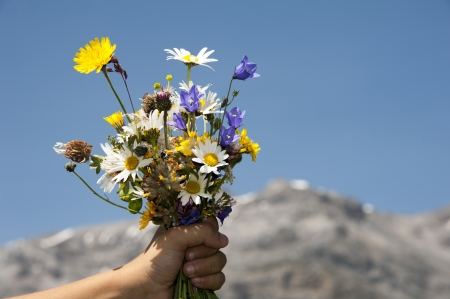 Flowers for you - mountain flowers in a child hand for mum photo