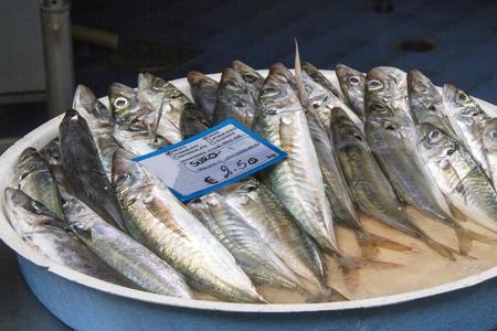 horse mackerel in a fish shop in Italy Stock Photo - 21744439