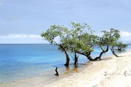 brazil beach: Sea and trees - Brazil beach