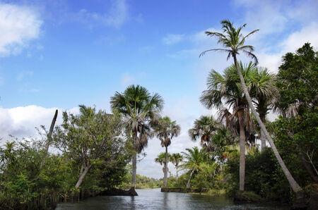amazon river: rainforest in Amazon, in  Brazil