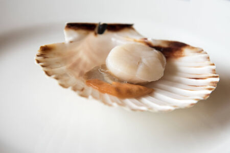 opened: Fresh opened scallop on white dish