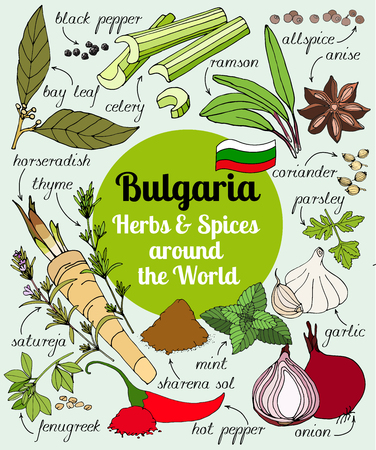 Vector set of hand drawn Bulgarian herbs and spices. Set of herbs and spices for design menu, banner and label. Colored illustration of spice and herb. Spices and herbs used in Italy for cooking.