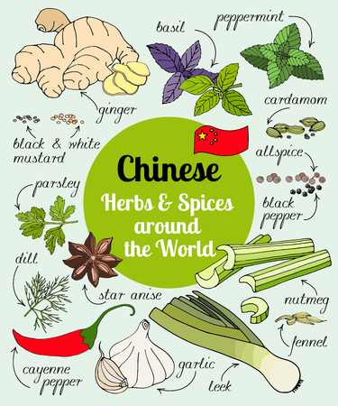 Vector set of hand drawn Chinese herbs and spices.