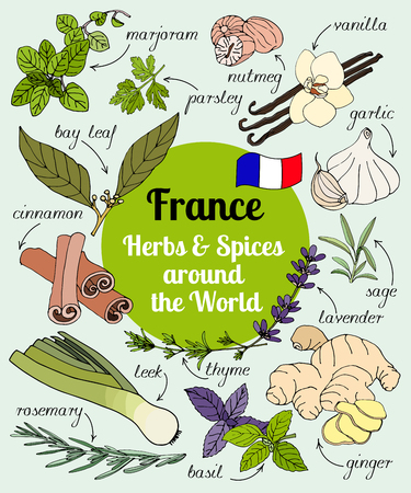 Vector set of hand drawn France herbs and spices. Illustration