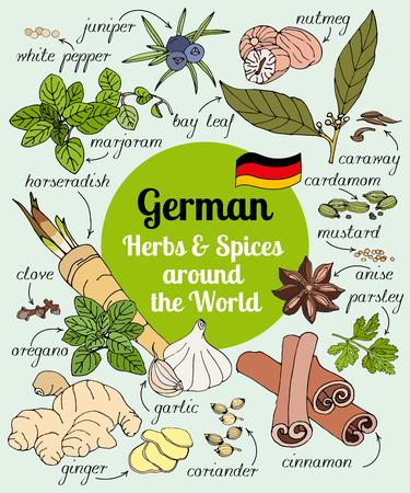 enebro: Vector conjunto de dibujado a mano hierbas alemanas y especias.