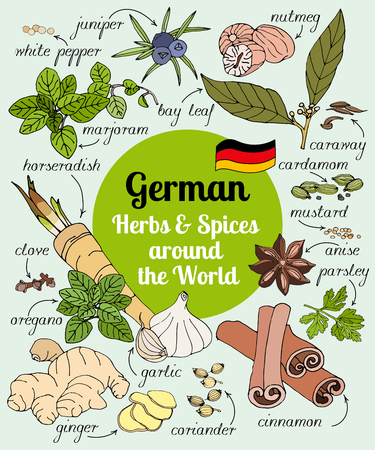 oregano: Vector set of hand drawn German herbs and spices. Illustration