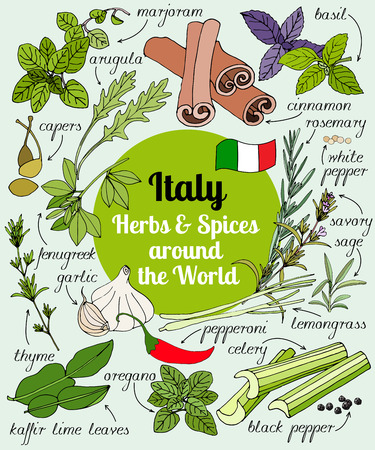 Vector set of hand drawn Italian herbs and spices. Set of herbs and spices for design menu, banner and label. Colored illustration of spice and herb. Spices and herbs used in Italy for cooking. Vettoriali