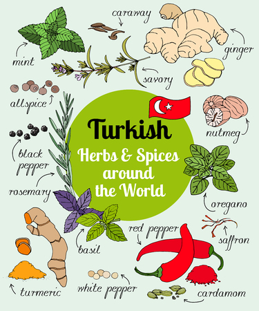 Vector set of hand drawn Turkish herbs and spices.