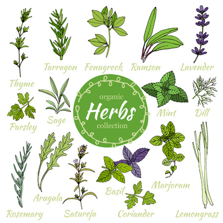 Vector collection of herbs. Herbal illustration. Cooking herbs. Medical herbs. Set of hand draw herbs for food and cosmetic. Organic food illustration. Set of herbal supplements