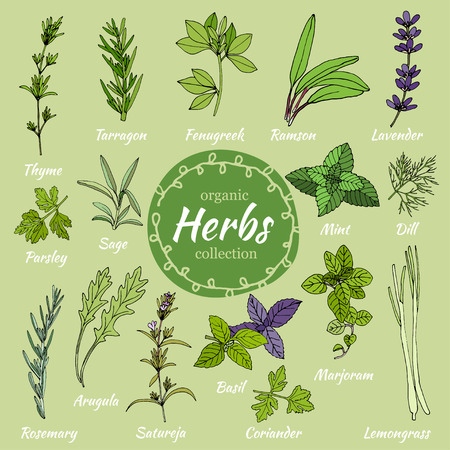 Set of hand draw herbs for food and cosmetic. Vector collection of herbs. Herbal illustration. Cooking herbs. Medical herbs. Organic food illustration. Set of herbal supplements Illustration