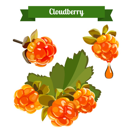 Cloudberry illustration. Cloudberry isolated on white. Medicinal berry. stock vector illustration for food and cosmetic label and banner