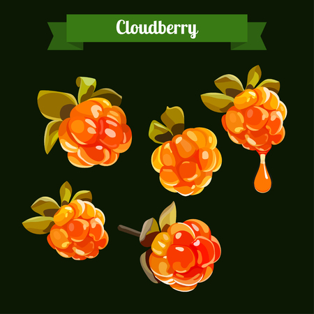 Cloudberry illustration. Cloudberry isolated. Medicinal berry. stock vector illustration for food and cosmetic label and banner