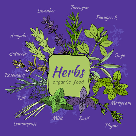 Hand draw illustration of herbs for food and cosmetic. Vector collection of herbs. Herbal illustration. Cooking herbs. Organic food illustration. Set of herbal supplements. Ayurvedic ingredients.