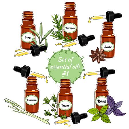vector set van etherische oliën. Handgetekende essentiële oliën en natuurlijke supplementen. Citroengras, tijm, salie, basilicum, anijs, dragon. Vector illustratie set - voorraad vector